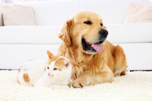 dog-cat-on-carpet-
